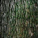Przepiękny oraz {czysty zieleniec to nie lada wyzwanie, zwłaszcza jak jego konserwacją zajmujemy się sami.